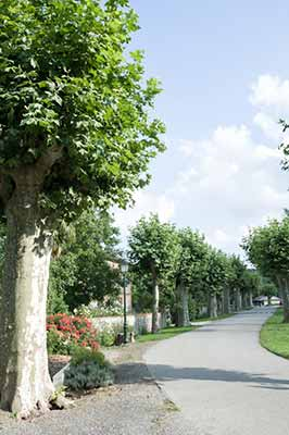 allee-place-village